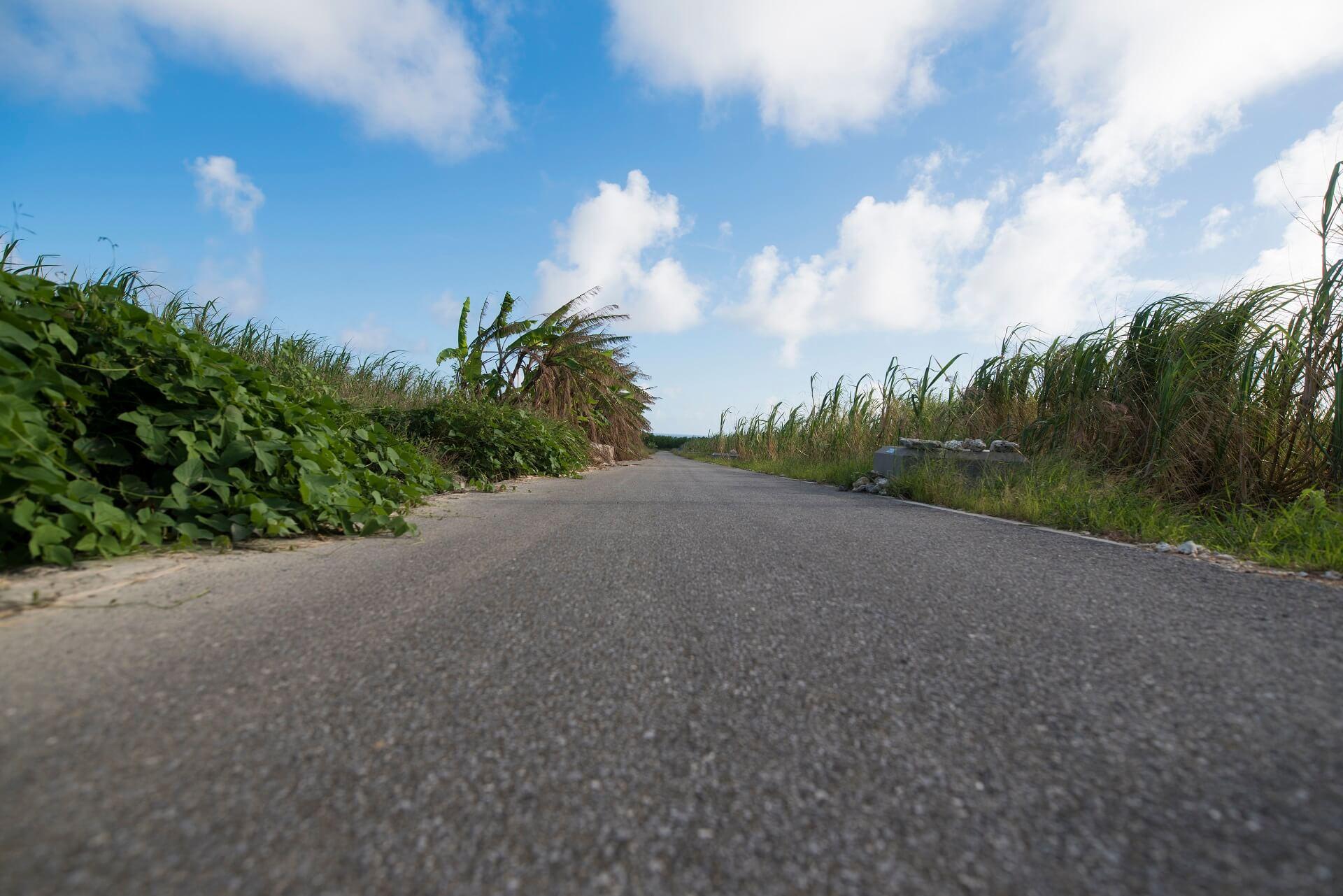 さとうきび畑と道路と青空の画像