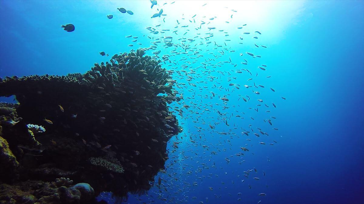 根と小魚の群れを逆光で撮影した写真