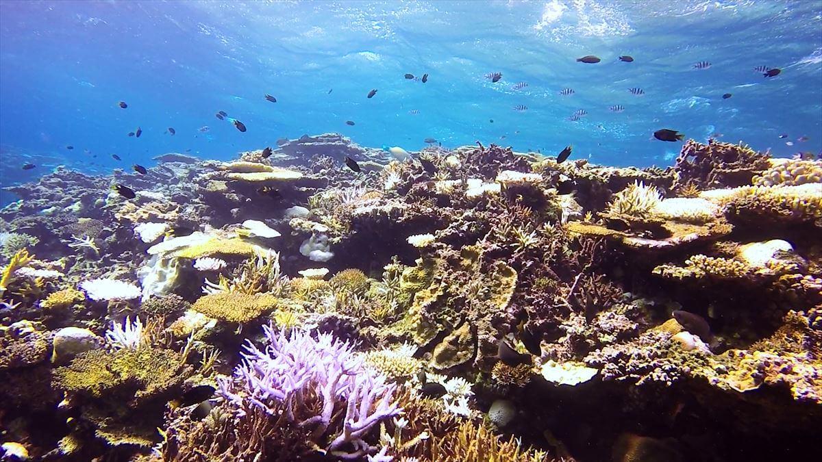 透明度の高い西表の水中写真