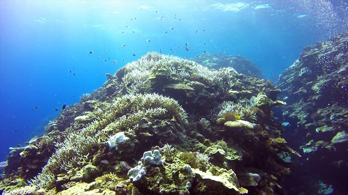 巨大なサンゴ礁と水中から見た太陽の画像