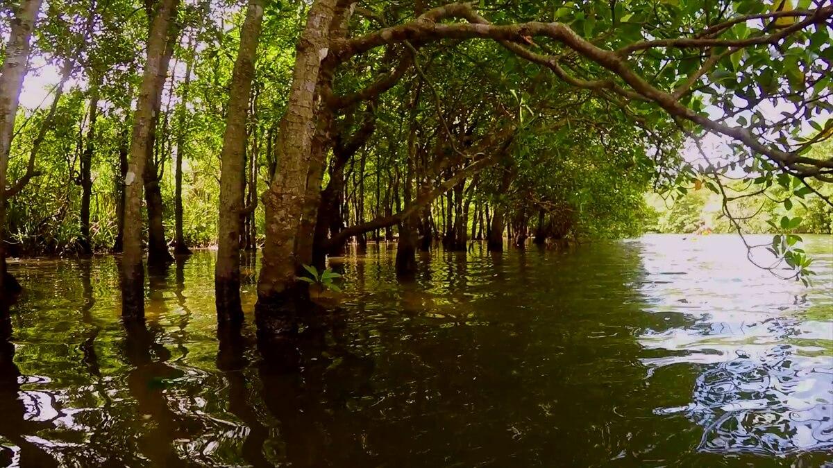 川とマングローブの写真