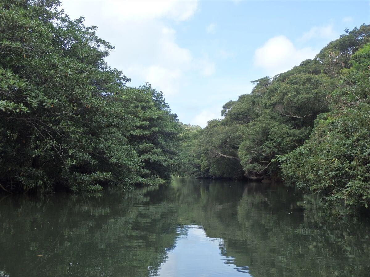 カヤックで川を下りマングローブ探検2