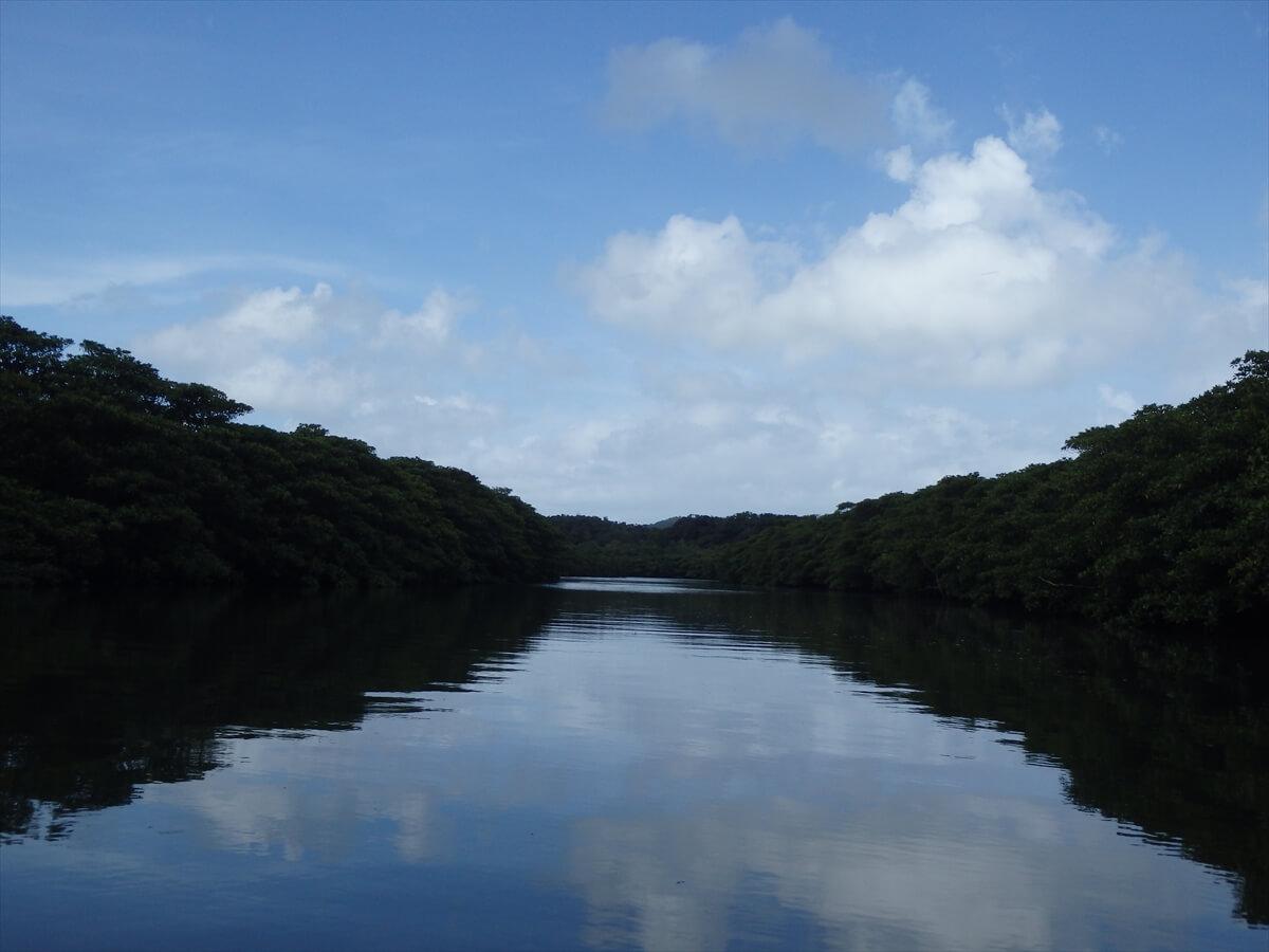 カヤックで川を下りマングローブ探検3