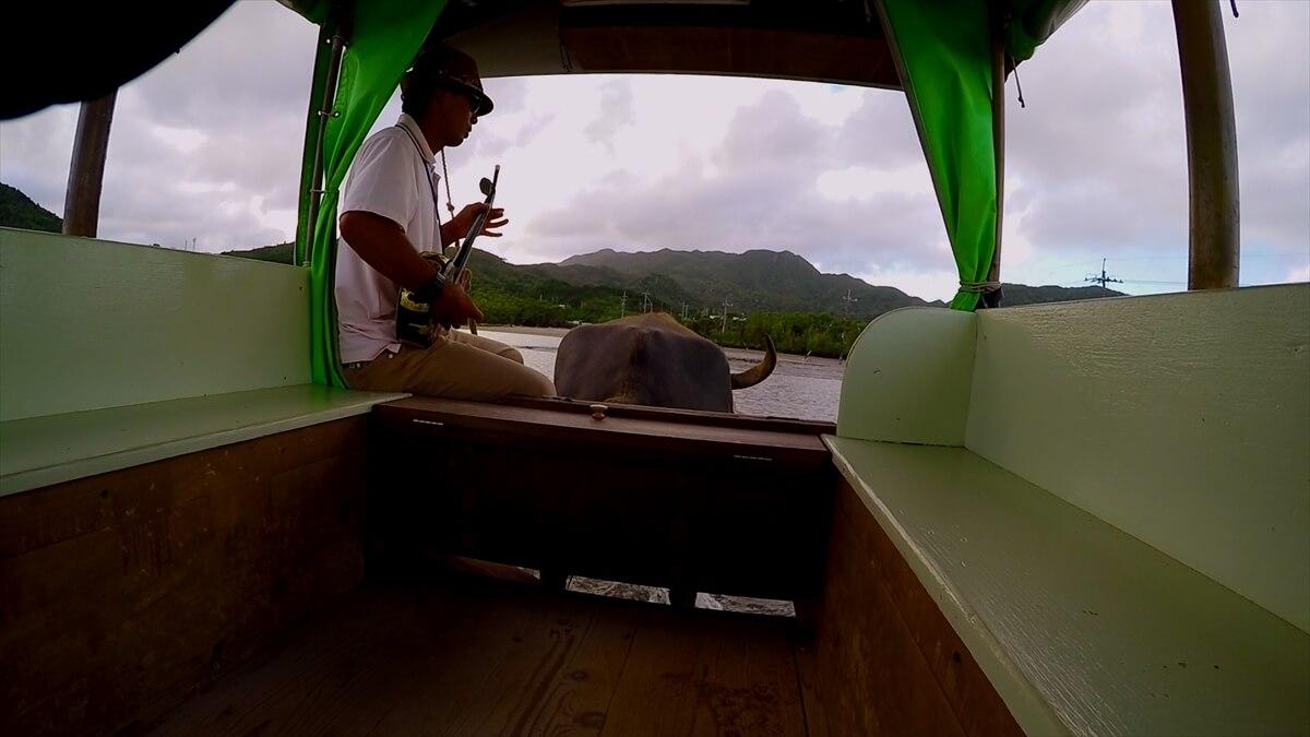 由布へ渡る水牛車とガイドの男性の写真