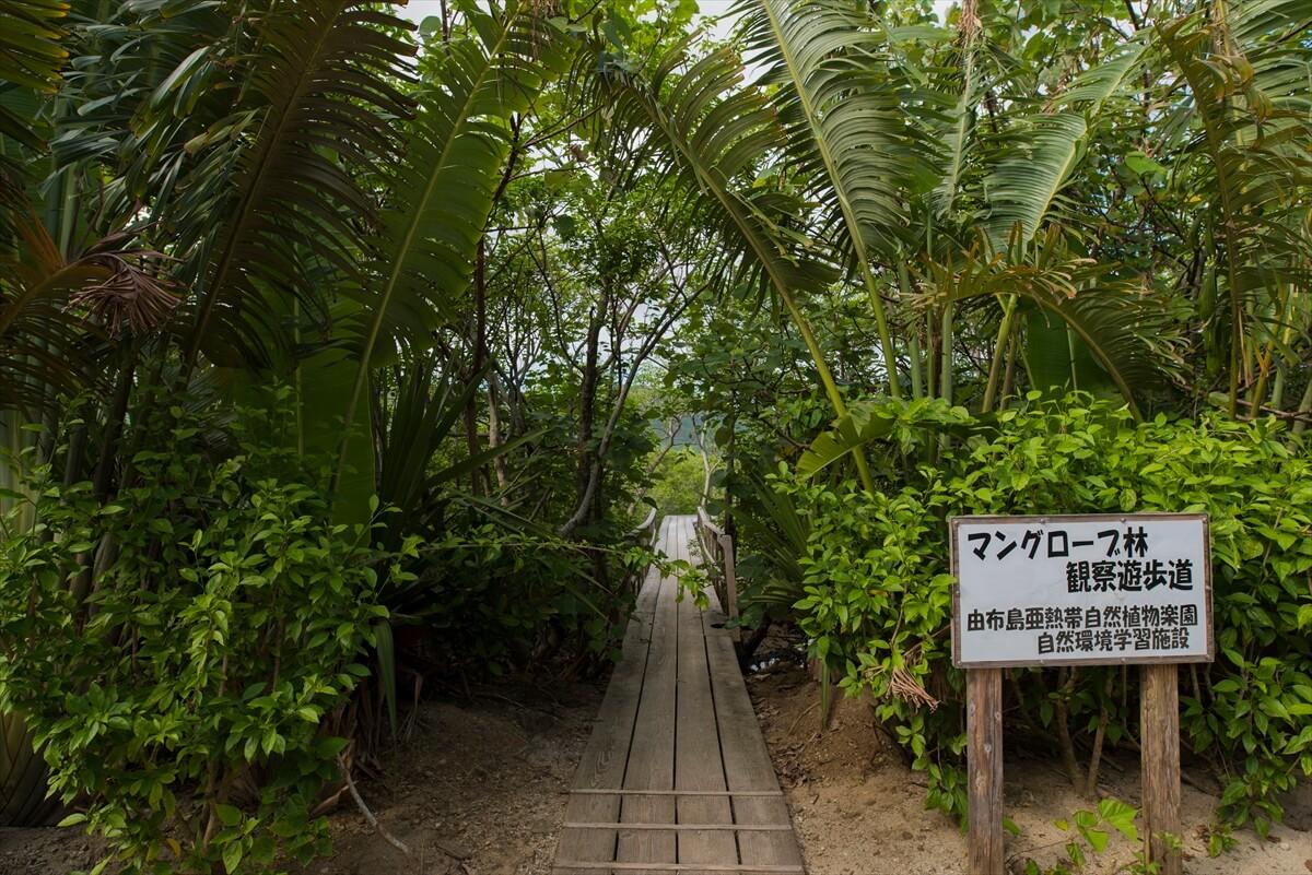 マングローブ林観察遊歩道