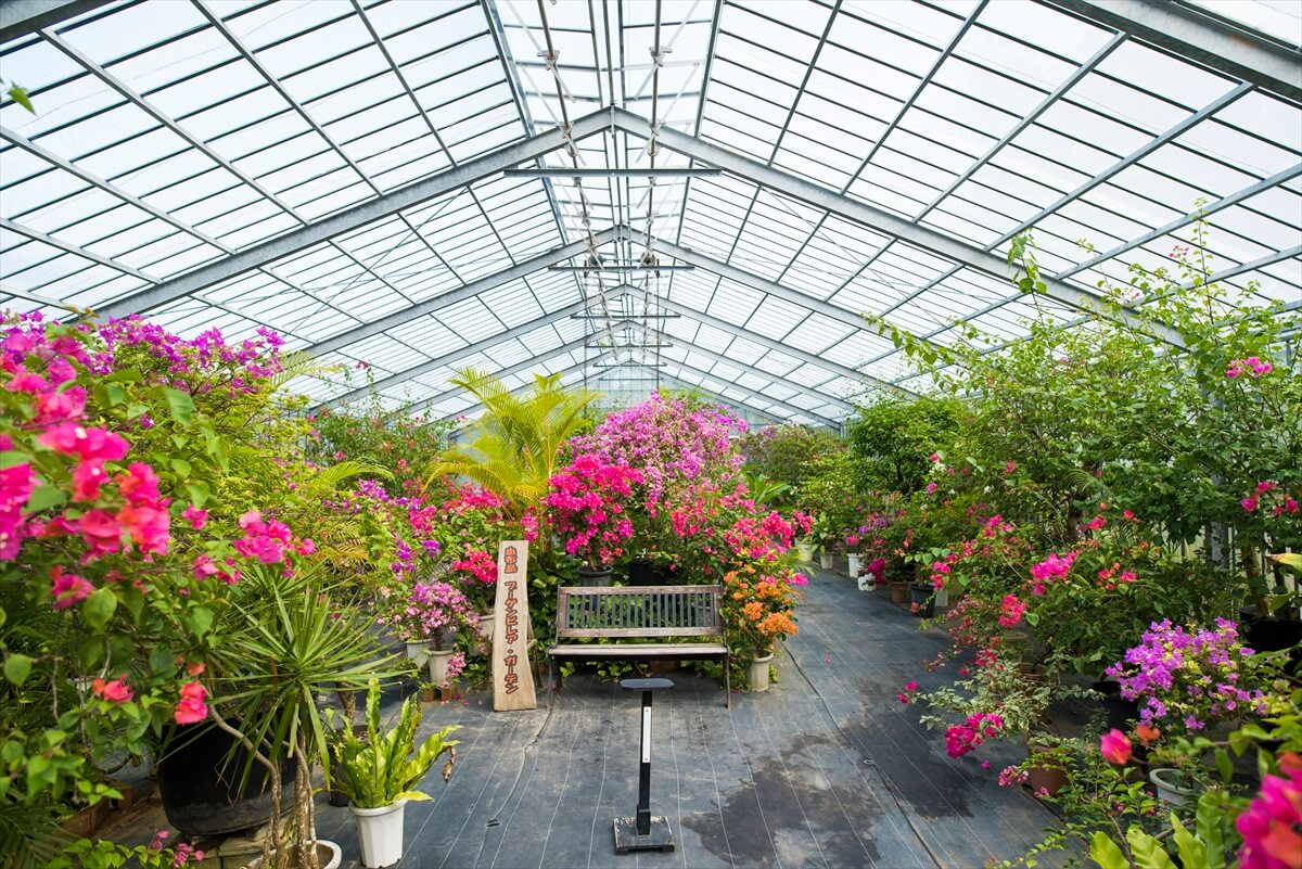 花が沢山ある由布島ブーゲンビレア・ガーデン