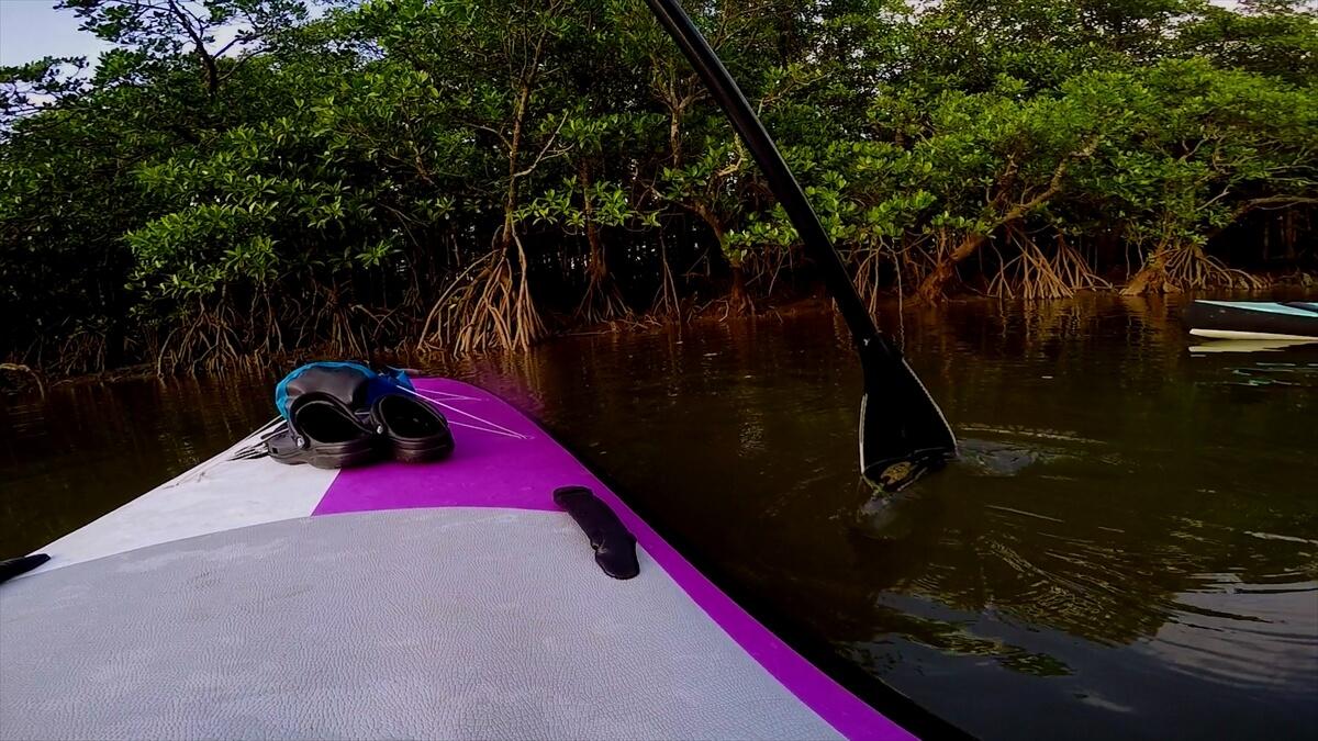 SUPでターンしながら見るマングローブ