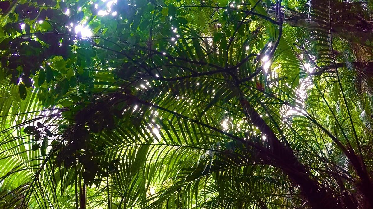 西表の亜熱帯ジャングルの写真画像