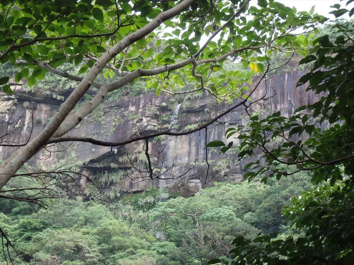 滝と崖と亜熱帯雨林の写真