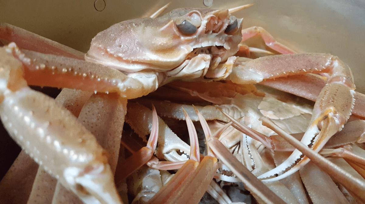 食べられる前の蟹が鍋に入っている写真