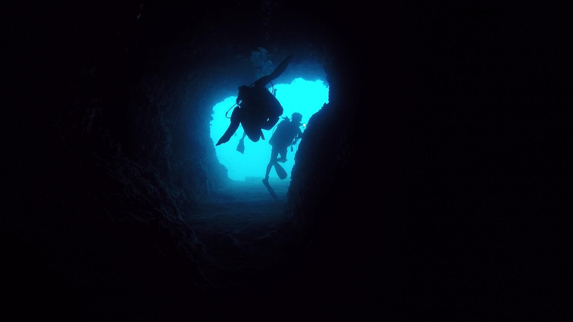 キンセンフエダイの群れの水中写真画像