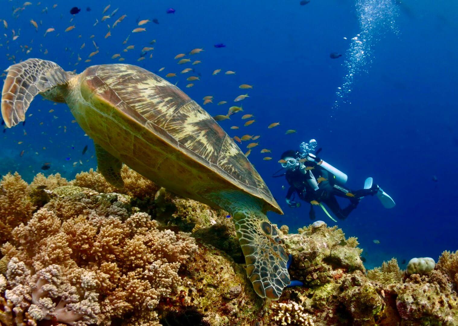 ボホール島ダイビングで会ったウミガメの写真