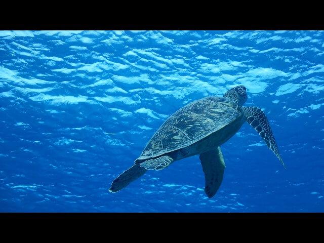 慶良間諸島でのダイビング画像