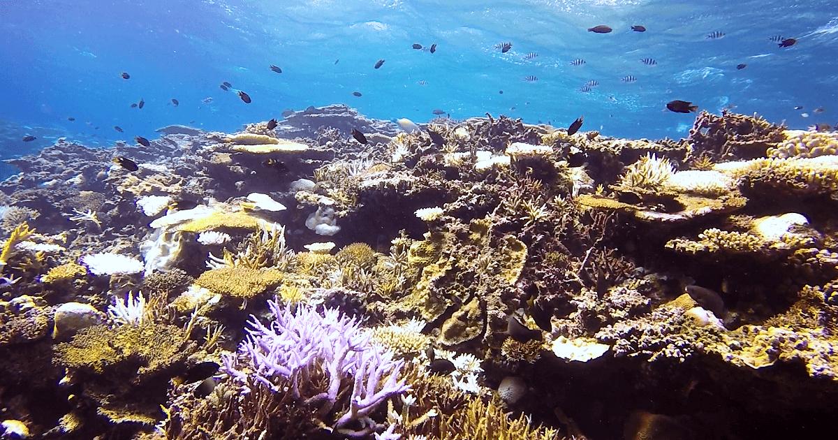 西表の珊瑚礁と小魚の群れや水面の水中写真