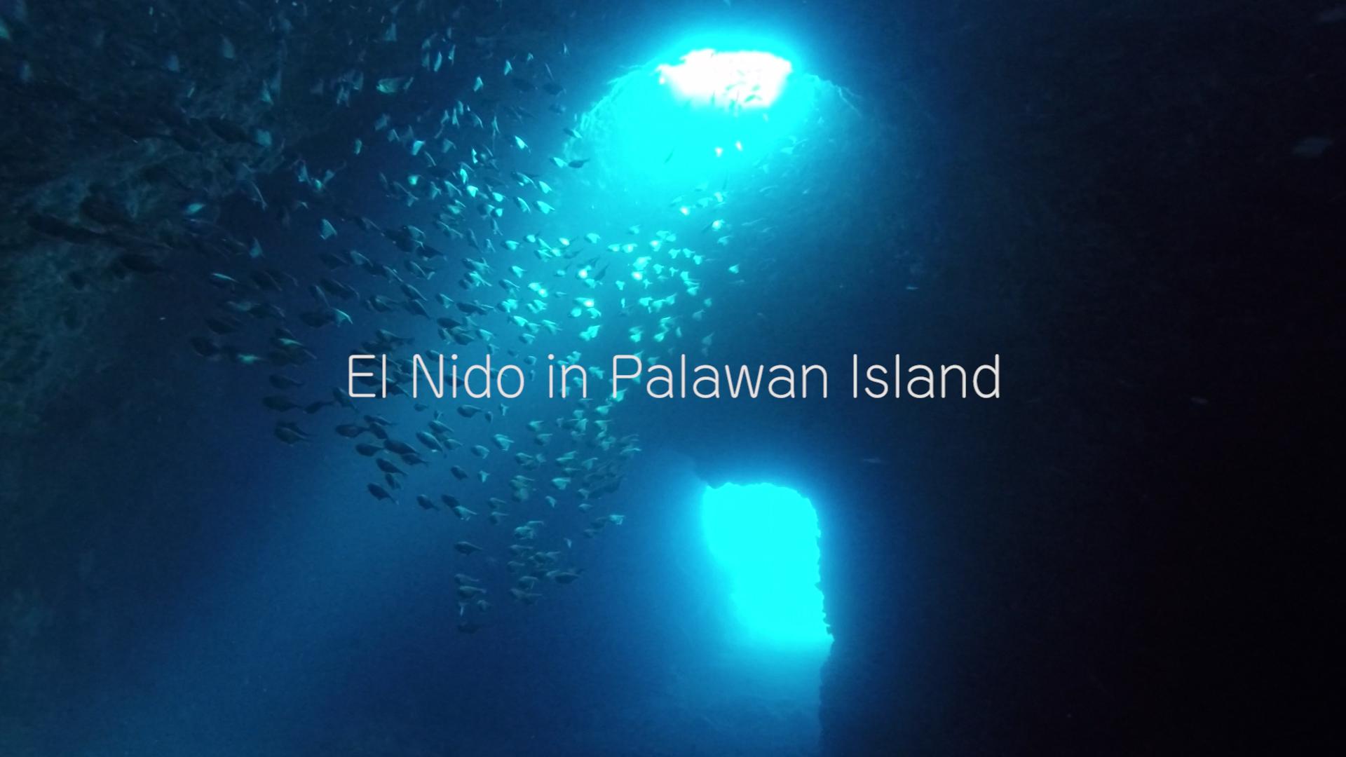 パラワン諸島・エルニドダイビングのサムネ画像